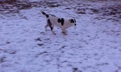 We have an adorable pup who is 4 1/2 months old, and she needs a new home for the new year. She is 3/4 border collie and 1/4 husky. She will be a smallish dog perfect for a farm or acridge. She is brown and white. Call 306-374-1220