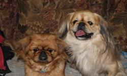 I have two boys and 2 girls, will come with their first vaccines, and will be dewomed (done Feb 4th) they will also be vaccinated against bordatella, well socialized with kids and dogs. About the Pekingese: Temperament - The pekingese displays great