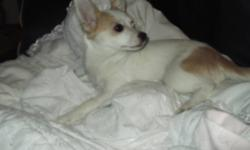 Lovely is our last little girl left. She is a timed, cuddly, playful little pup. She is the  one out of six very healthy puppies. I have lowered the price by 125.00 already so I am firm on it.  I work nights and have little time for training otherwise I'd