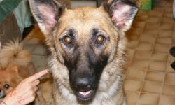 We are selling our German Sheppard because we don't have time to train her. She is not spayed, great with kids, cats and little dogs. She does like to chase the cats if the run from her, but would never hurt them. Kodi is kennel trained, and has some