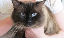 I have a beautiful ragdoll breeding pair for sale.  The male is a seal point ragdoll, a wonderful breeder.  He has been a daddy to several litters of beautiful little fluffballs.  The female is a beautiful girl.  She has dark blue eyes, and a beautiful