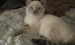 I have 3 Ragdoll kittens for sale. They come with all of their vaccinations and deworming done as well as identification tattooed. They also come with a kitten starter kit with just about everything you will need to get started out with your new kitty. I