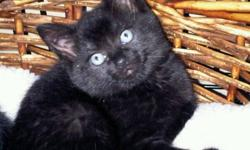 Starfish cat rescue has several beautiful, healthy babies ready to leave our family for the loving foreverness of yours. They are looking for secure owners who would never move without them, who will feed them healthy food and take them to the vet for