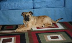 I'm a nurse that works in Northern MB. I took this pup out a few weeks ago & am trying to find a responsible, good home for her. She is a German Shepherd X and is about 12 weeks old. I have de-wormed her and immunized her against any parasites, mites,