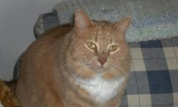 Have you seen my kitty?? Have had sine he was a kitten. Indoor cat, he snuck out when I took out the garbage. Missing from Castledowns since aug 4 Med, very smooth & silky hair, very sweet, very gentle, missed immensely! May be matted now. 11yrs old,