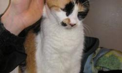 Breed: Calico   Age: Senior   Sex: F   Size: M Hannah is a very friendly and talkative 12 year old cat that is ready for her new home.   View this pet on Petfinder.com Contact: Richmond Animal Protection Society / City of Richmond Animal Shelter |