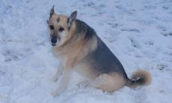 My 6 year old Shepherd Cross needs to good, loving home! She was spaded as a puppy and has all of her shots. She is active and loves the water and to go for long walks. She would be best suited for a single person with no children.