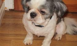 Need to rehome our 3 Shih Tzu adults 2 1/2 years of age Main picture is the male black/white Imperial Toy 2 females, black/white and white/tan Warm, loving affectionate, good with children and other pets