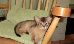 Kittens raised underfoot. Litter registered with the Canadian Cat Association. We have retired adults and kittens available. Inquire by email or phone. We are currently located in Dartmouth, NS.