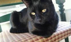 I have 2 one year old all black cats who are brothers. I need to find them a home, as well as a pale orange kitten and black and white kitten with extra toes! I can't afford them anymore and do not have time to give them the affection and attention that