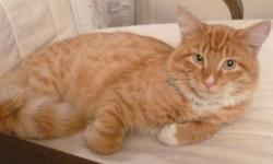 Have a very friendly, orange male cat, less than 1 year old who would like to go to a nice home. If you are interested please call.