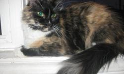 This is sweet little Hope. She is looking for her forever home. She is 2 years old and is very little..I never met a cat that was so good with children. Hope does not even run away from my 4 year old and not even one bit nervous around my dog or cat. She