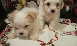 HELLO , I HAVE TWO MALES LEFT READY FOR THIER FOREVER HOMES,FIRST NEEDLE ,DEWORMED,LOVE TO CUDDLE AND GIVE KISSES TO YOU ,IF YOU ARE INTERESTED PLEASE CONTACT BRIDGETTE @1902 742-2579 DO NOT RESPOND TO MY EMAIL AS I AM PUTTING THIS ON FOR A FRIEND. THANKS
