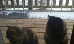 I have two wonderful house/farm cats that need a good home as I am moving and can't take them. They both have their vaccinations and shots as well as have been fixed. They are indoor/outdoor cats and are great family pets. Can be taken individually or
