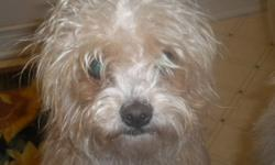 Two Yorkie-poo's pups $200.00 for both very lovable great with children and other animals