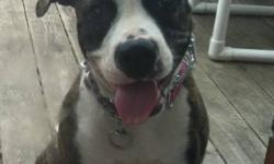 8 months old Female American bulldog is needing a new home.. She is kennel, house and doggy door trained. She has completed petsmart's puppy classes and is a very happy and healthy pup! She has loads on energy and is extremely affectionate! She comes with