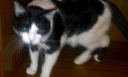 Our 4 year old cat Oreo is in need of a new home. He is sweet, litter trained, fixed and gets along well with other animals and children. Due to allergies in the family we can no longer keep him. Please contact me for more information if interested. If