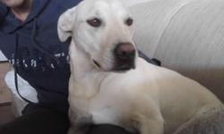 Puppies Name: Charli Birthdate : August 3 2009 2 years old has ad all of her shots Type of Puppy: Labrador Terrier Mixture She is a female well mantained bathroom trained, know when she wants to go for a bathroom walk extremely obidient loves children