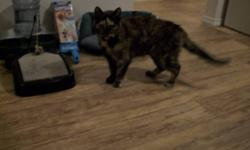 Breed: Tortoiseshell   Age: Young   Sex: F   Size: S COURTESY POSTING: I would like to see my cat go to a good home. She has been with me for the last 5 years living on farm property.Her name is Babe and she is an indoor cat but will walk the perimeter of