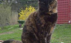 Breed: Tortoiseshell   Age: Young   Sex: F   Size: M DOB December 17,2009 . Clara is a wonderful girl that came in to CAPS care at Christmastime 2010 with a group of 8 others from the pound. She is so happy to be in a place that is warm and loving now,