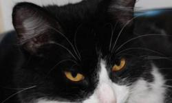 Breed: Domestic Medium Hair-black and white   Age: Young   Sex: F   Size: M Delilah is a beautiful 9 month old female who was surrendered to the Saskatoon SPCA due to allergies. She has been at the shelter since July 19th/11, and is an indoor cat that his