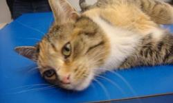 Breed: Domestic Short Hair   Age: Young   Sex: F   Size: M This pretty girl is quite the flirt! She is an outgoing and very affectionate cat who joined the rescue after a short stay at the local city pound. Flirt grabbed our attention by being a sweet,
