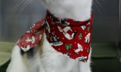 Breed: Domestic Short Hair   Age: Young   Sex: F   Size: M Frisky is practically bursting with personality. Visitors are greeted with a chorus of friendly seasonal meow greetings. To describe her as outgoing wouldn't do justice to this one-of-a-kind