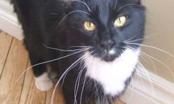 Breed: Domestic Short Hair-black and white   Age: Young   Sex: F   Size: M AVAILABLE FOR ADOPTION THROUGH OWNER - Contact (902) 745-3495, (902) 635-0395, or tyler_stoddard@hotmail.com. From Cape Sable Island. Do not contact PET Projects about these cats -