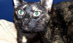 Breed: Tortoiseshell   Age: Young   Sex: F   Size: M Henna is a sweet girl who loves attention, you should have seen her hamming it up for the camera when her picture was being taken. She has a coat that is a mix of many gorgeous colors which is