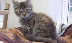 Breed: Tabby - Brown   Age: Young   Sex: F   Size: M Bailey is a little snuggle bug. She is cute, affectionate and loves love! Visit www.petprojects.ca and fill out an online application to adopt this or any other of our deserving pets, or email