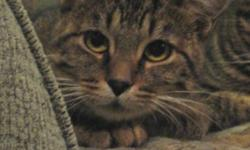 Breed: Tabby - Brown   Age: Young   Sex: F   Size: M Fern is a perfect example of why spaying and neutering is so important. This poor little girl was left outside last winter when just a kitten, and as a result lost about a third of her tail to
