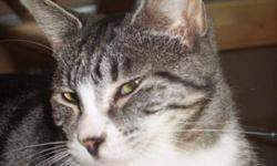 Breed: Tabby - Grey   Age: Young   Sex: F   Size: S this little doll is with a foster mom so interested adopters are asked to send us an email to be forwarded to the family to arrange a viewing time.   View this pet on Petfinder.com Contact: SARA