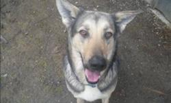 Breed: German Shepherd Dog   Age: Young   Sex: F   Size: M Angel has won over the hearts of many staff members here at the Surrey shelter. When Angel first arrived at the shelter she was in bad shape, very underweight, fearful and had a litter of puppies.