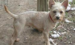 Breed: Terrier   Age: Young   Sex: F   Size: S Laci is a cute little 1-2 year old blonde terrier x who weighs approximately 10 lbs. She is friendly, good with other dogs, great with kids and is supposed to be housetrained. She came into rescue with her