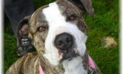 Breed: Pit Bull Terrier Boxer   Age: Young   Sex: F   Size: L Mary has sure changed quite a bit since we first met her. From a stressed out and scared shelter dog on first meet, to a more relaxed and confident young lady. She was tremendously adored by