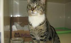 Breed: Domestic Medium Hair   Age: Young   Sex: M   Size: M Jake is a very sweet handsome little guy who loves to be held and snuggled. When he came to the shelter he had some crazy issues with his bowels, but have since cleared up and is doing very well
