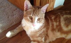 I have a orange male cat six months looking for a home. He is neutered and has been raised around young kids. He is very gentle and extremely loving.