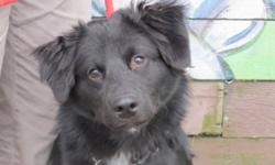 Breed: Border Collie   Age: Young   Sex: M   Size: M Charlie has been in a foster home for the last month, so we've got new information on him now! He is housebroken, REALLY enjoys playing with other dogs and attends doggy daycare (although sometimes he